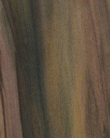Rainbow Poplar